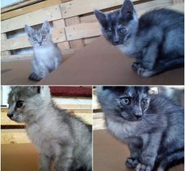 2 cica