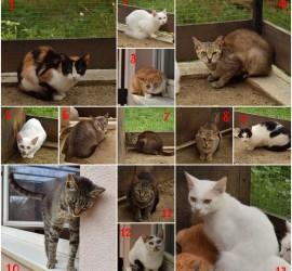 13 macsek
